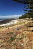 Küstenlandschaft an Golf-St. Vincent Stockfoto