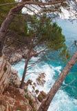 Küstenlandschaft. Kiefer wachsen auf den Felsen Stockfoto