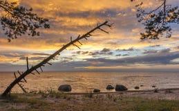 Küstenlandschaft mit Überresten der Kiefers am Vordergrund Lizenzfreie Stockfotografie