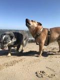 Küstenlinie des Insel RÃ ¼ GENs mit Hund stockfotografie