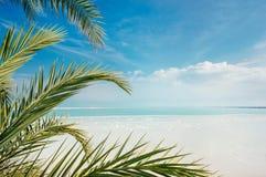 Küstenlinie des Toten Meers Stockfoto