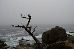 Küstenlinie entlang dem 17 Meilen-Antrieb Lizenzfreie Stockfotografie