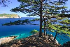 Küstenliniebäume 17 Lizenzfreies Stockbild