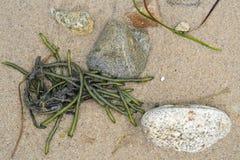Küstenlinien-Detail des Meerespflanzen-Sandes und der Steine Stockfotografie