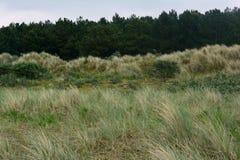 Küstennatur und Pinery im Abstand, Nordmeer, Holkham-Strand, Vereinigtes Königreich Lizenzfreie Stockfotografie