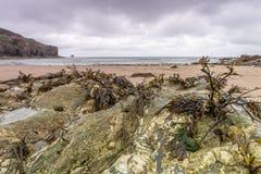 Küstenstandort um Trevaunance-Bucht in Cornwall England Großbritannien Lizenzfreie Stockbilder