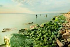 Küstensteine bedeckt mit Schlamm auf Bankfluß Stockbilder