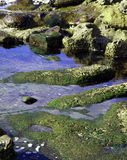 Küstentidepools und moosige Felsen stockfoto