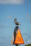 Küstenvogel Stockfotos