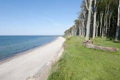 Küstenwald Lizenzfreie Stockfotografie