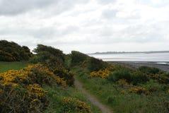 Küstenweg Stockbild