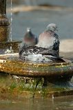 kąpać fontannę Obraz Stock