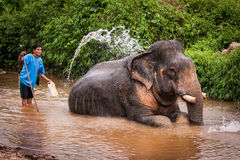 Kąpać się elefant mahout, Khao Sok sanktuarium, Tajlandia Zdjęcie Royalty Free