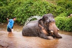 Kąpać się elefant mahout, Khao Sok sanktuarium, Tajlandia Fotografia Royalty Free