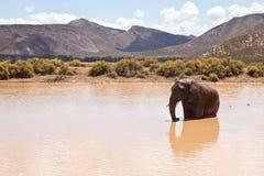 kąpanie afrykański słoń Obraz Royalty Free