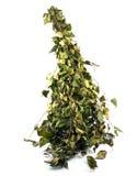 kąpielowy brzozy miotły suchy zielony rosjanin fotografia royalty free