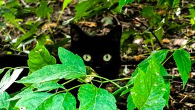 Kąt z zielonymi oczami obrazy stock
