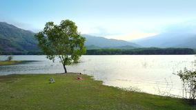 Kędzierzawy samotny drzewo na jeziornym banku i dziewczynie na trawie zdjęcie wideo