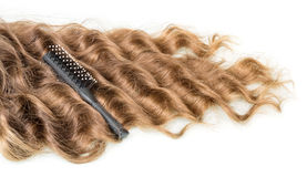 Kędziory i falistego włosy grępla na bielu Obraz Royalty Free