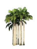 Kępa drzewka palmowe fotografia royalty free