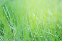Kępa trawa obraz stock