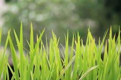 Kępa trawa obrazy stock