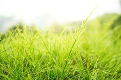 Kępa trawa Z światłem słonecznym obraz royalty free