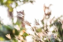 Kępa trawa Z światłem słonecznym zdjęcie stock