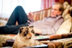 Kłapouchy trakenu kot na tle mężczyzna Zdjęcie Stock