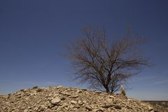 Kłująca akacja w odludziu Queensland z niebieskiego nieba backgroune zdjęcie stock