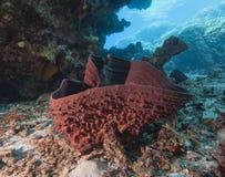 Kłująca tubki gąbka na piaskowatym dnie morskim Obraz Stock