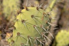 Kłujący kaktus w Laguna pustkowia parku fotografia stock