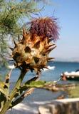 Kłujący kwiat Obrazy Royalty Free