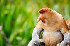 Kłujki małpa obraz stock