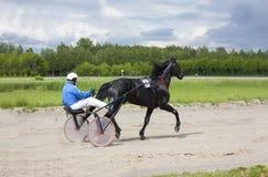 Kłusować konie przy tor wyścigów konnych zdjęcia royalty free