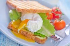 Kłusujący jajko zdjęcia stock