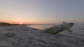 4k与树干和镇静波浪,意大利的电影海滩日落timelapse 股票视频