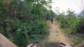 4K亚洲大象顶视图,当游人小组乘驾通过森林时 股票录像