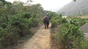 4K亚洲大象顶视图,当游人小组乘驾通过森林时 股票视频