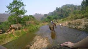 4K亚洲大象顶视图,当游人小组乘驾通过河时 股票视频