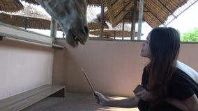 4K亚裔妇女在徒步旅行队世界动物园喂养一头长颈鹿用小香蕉 股票录像