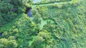 4k从寄生虫、美妙地色的沼泽、影片光和深度射击了 股票视频