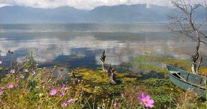 4k变粉红色波斯菊bipinnatus,凋枯在水中,山&云彩在湖反射 影视素材
