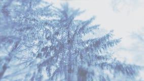4K在云杉的森林里弄脏了强的飞雪或降雪录影背景  向量例证
