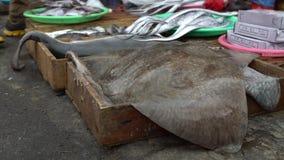 4K在Jagalchi鱼市上的卖鲨鱼和披巾 海鲜市场釜山 股票视频