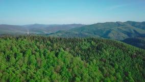 4k寄生虫射击 前进向松木森林和山谷在夏日 偷猎者裁减了森林  影视素材