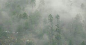 4k山薄雾上升早晨的,雾杉树,波密县在西藏 股票视频