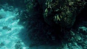 4k录影由美好的水下的风景潜水艇做了 珊瑚礁和游泳的热带鱼 影视素材