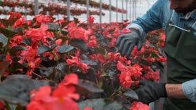 4K提供援助的手接触年幼植物自大温室 农业或科学产业 股票视频