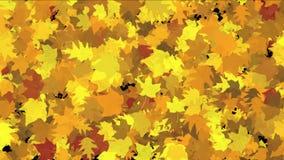 4k提取金槭树植物叶子,豪华的秋天季节叶子自然风微风 股票视频